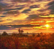 Late Sun by Vicki Field