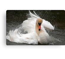Swan attitude Canvas Print