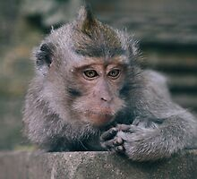 The thinker by areyarey