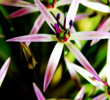 Allium Flower Macro Sticker