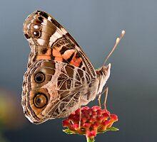 Butterfly by Regenia Brabham