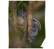 acrobatic snail Poster