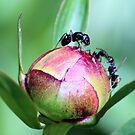 A Bit Antsy by Carrie Bonham