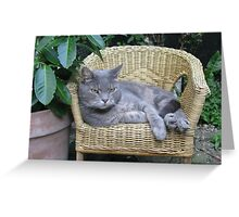 Cat on a kid's chair in the garden Greeting Card