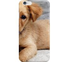 cute dog with priceless look on face iPhone Case/Skin