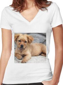 cute dog with priceless look on face Women's Fitted V-Neck T-Shirt