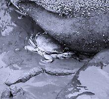 Low tide #2 by Adrienne Talbot