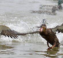Crazy Duck by Darren Bailey LRPS