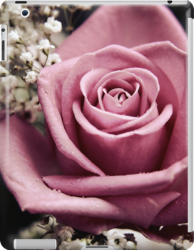 Vintage Pink Rose by Vicki Field