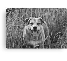 Happy Dog in Field Canvas Print