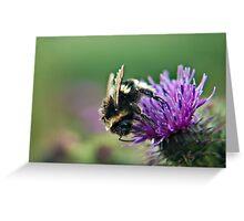 Scruffy Old Bumble Bee macro Greeting Card