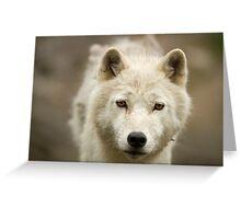 Arctic Stare Greeting Card