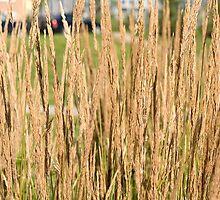 Urban Grassland by LaWeez