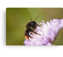 Pollen Covered Bee macro Metal Print