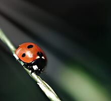 Ladybug Light by Vicki Field