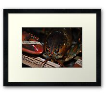 Lobster About to be Cooked Framed Print