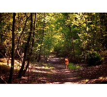 Woodland Walkies Photographic Print