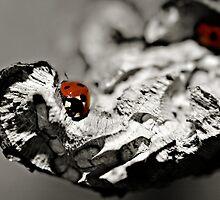 Ladybug on a stick macro by Vicki Field