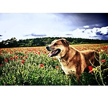 Dog in the Poppy Fields Photographic Print
