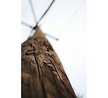 Staples and nails on a pole Photographic Print