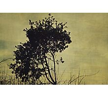 Tree Photographic Print