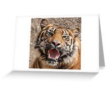 Big Cat Greeting Card