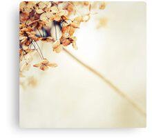 Flecha Canvas Print