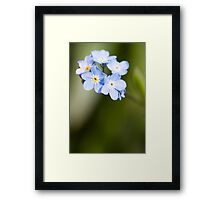 Forget~Me~Not Framed Print