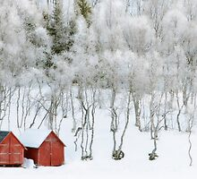 Winter Whiteness by Bodil Kristine  Fagerthun