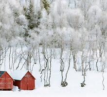 Winter Whiteness by Bodil Kristine  Fagerthun