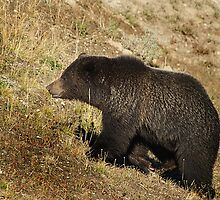 Grizzly Bear      #6748 by JL Woody Wooden
