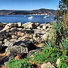 Bay on the Rocks by Daidalos