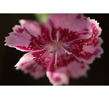 Flowering and pink Photographic Print