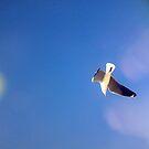 sea gulls by Daniel44