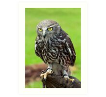 Green Eyes - barking owl Art Print
