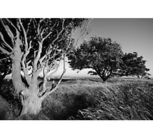 Trees in the tall grass Photographic Print