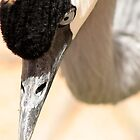 Crane close up by starbucksgirl26