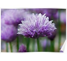 Chives Poster