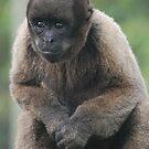 Woolly Monkey by Paul Morley