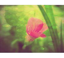 Four Seasons- Spring  Photographic Print