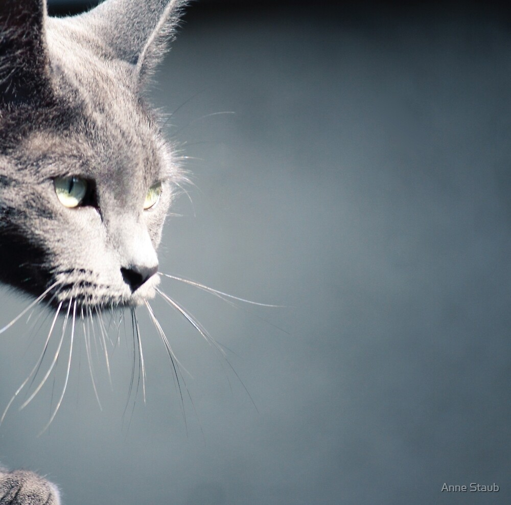Russian Blue by Anne Staub