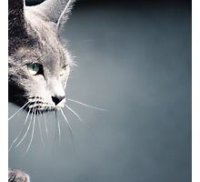Russian Blue Photographic Print