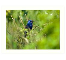 Blue Grosbeak in Habitat Art Print