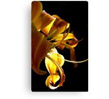 Goldern Ribbon  Canvas Print