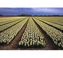 White Hyacinth Field Photographic Print