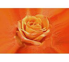 Orange rose Photographic Print