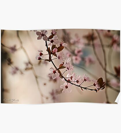 Spring Romance Poster