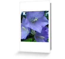 Blue Campanula Macro Greeting Card