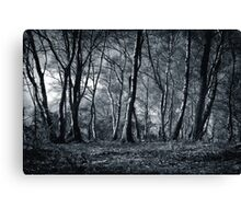 Forest Canvas Print