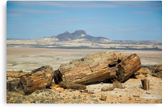 Petrified trees in Patagonia, Argentina. by Pablo Caridad